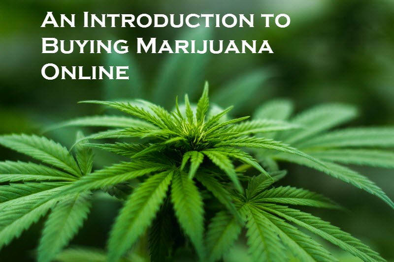 An Introduction to Buying Marijuana Online