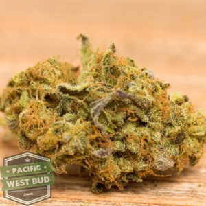 Buy Pink Kush Indica Dominant Hybrid Cannabis Online Canada